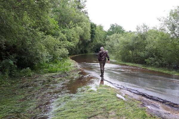 ruisseau lacanau pont de lemboulas2-reduit