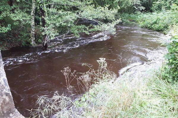ruisseau le lacanau pont de lemboulas3-reduit